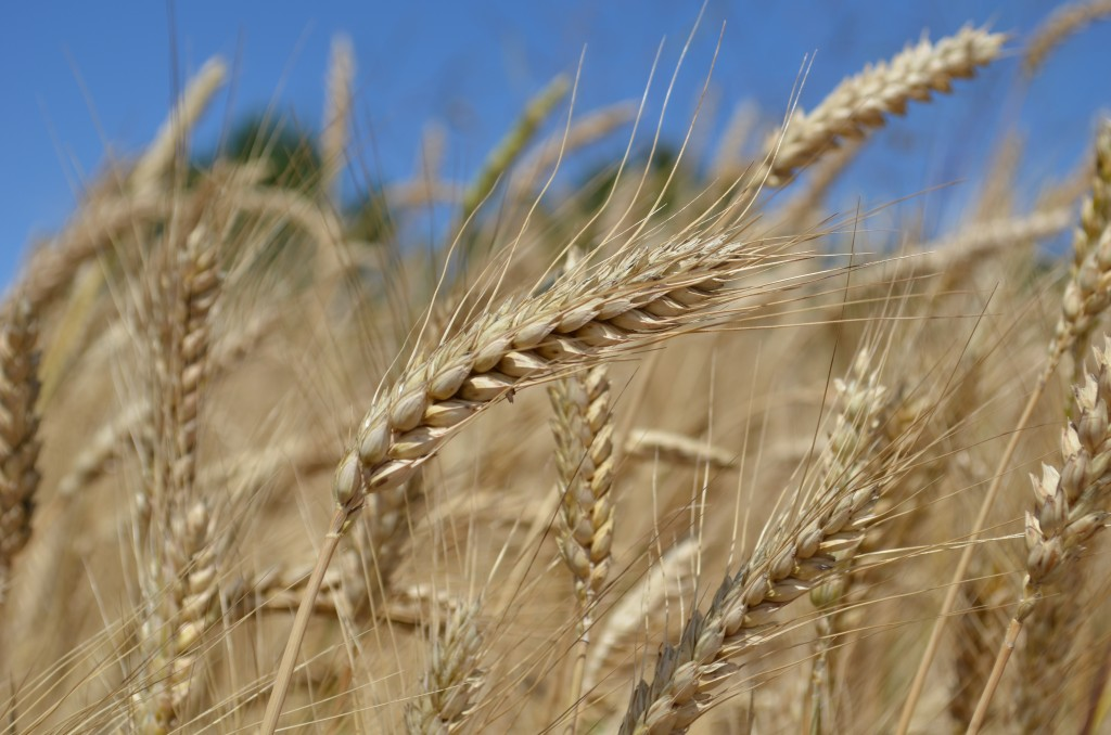 farm days 2012 4461